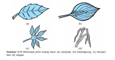 jenis tulang daun
