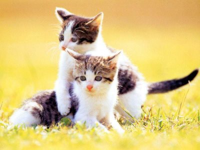 Foto Kucing Lucu Imut dan Menggemaskan 10