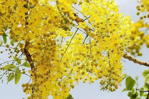 Natural Beauty Of Bangladesh Spring