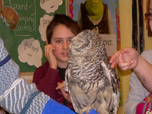 Owls in the classroom!