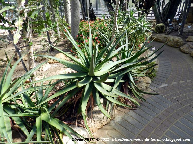 Patrimoine de lorraine villers les nancy 54 les serres du jardin botanique du montet 3e - Agave du mexique ...