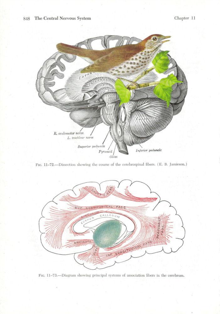 Dadadreams\' Original Collage Art: Anatomical Art Collages
