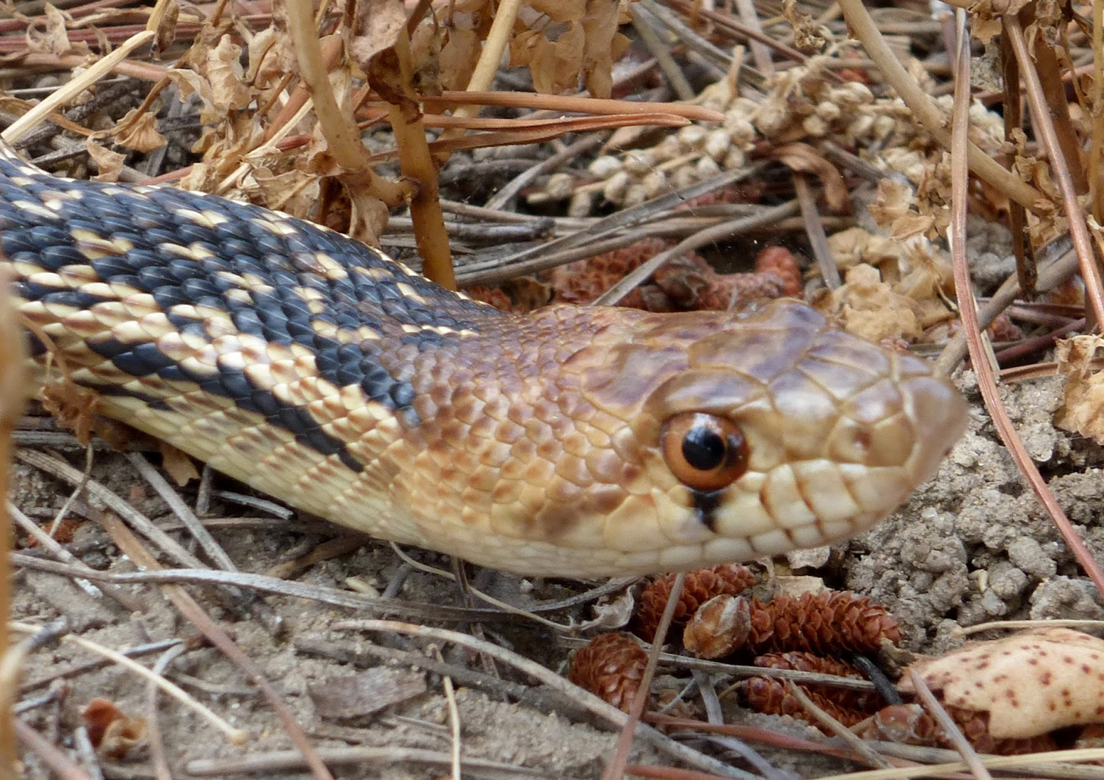 The Malibu Post: The Serpent in the Garden - photo#44