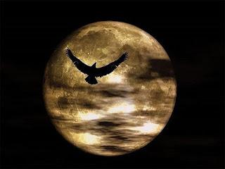 Sau khi trăng tròn, các loài động vật thường trở nên  linh hoạt hoặc hung hãn hơn một cách bất thường.
