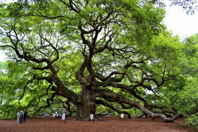 Wordless Wednesday: Charleston, SC » Over The Apple Tree