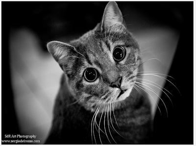 ảnh đẹp động vật, ảnh động vật đẹp nhất, hình động vật hài hước, hình ảnh động vật dễ thương
