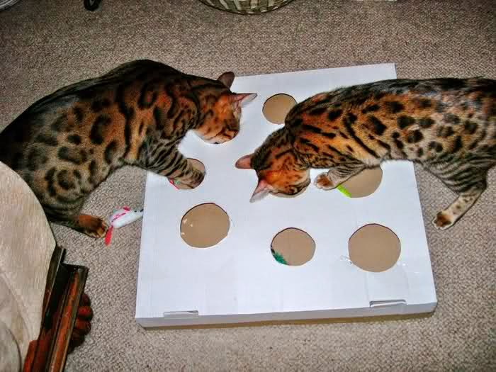 5 simple diy toys that your cats want you to make