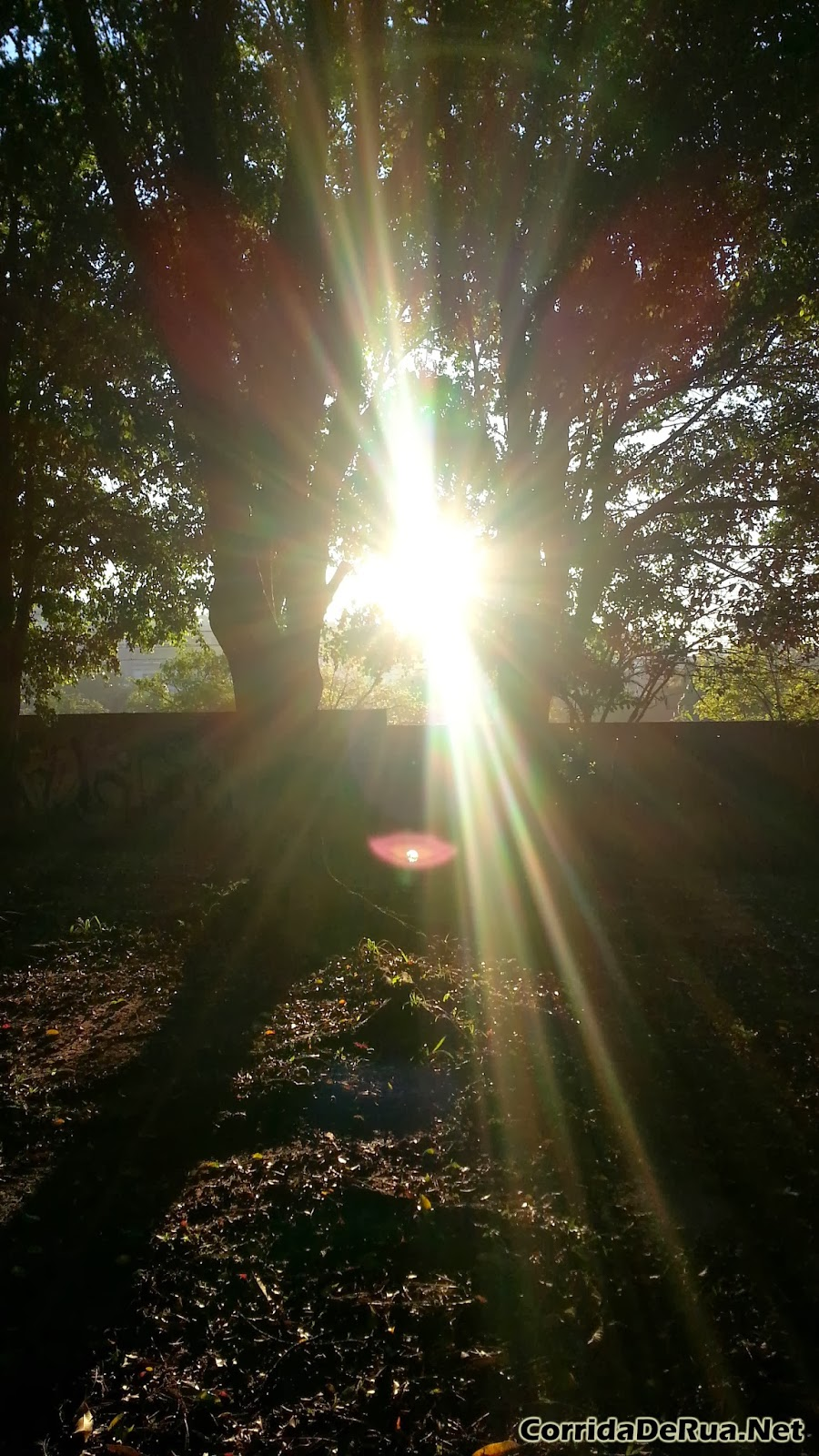 Nascer do Sol no Parque das Árvores - Zona Sul de São Paulo