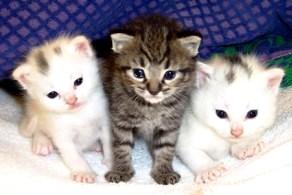 Fotos de gatitos pequeños