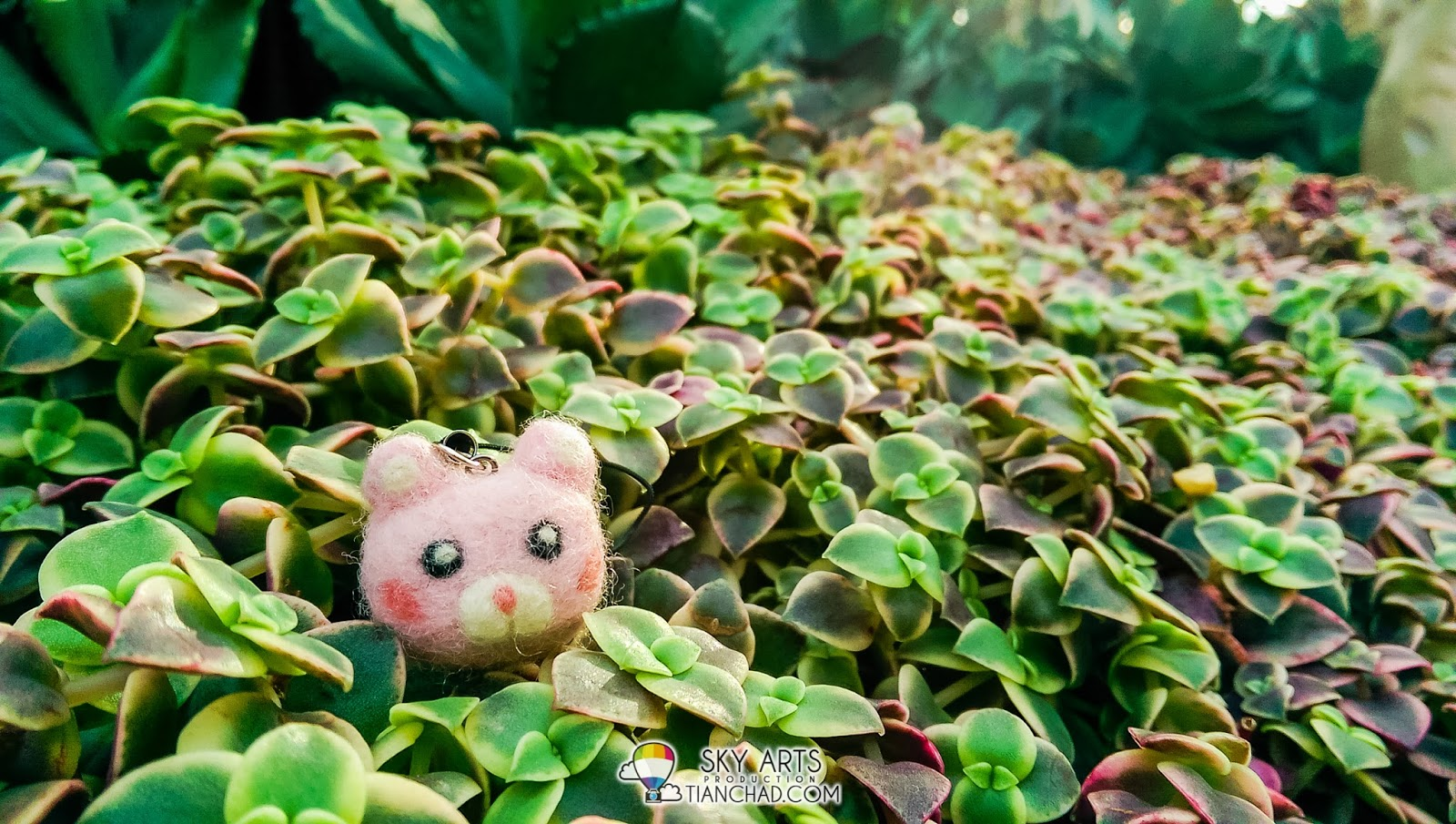 Macro shot of a keychain laying on top of miniature plants at Flower Dome @ Gardens by the Bay