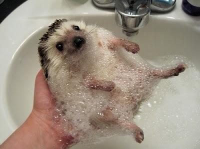Środki powierzchniowo-czynne, czyli co do mycia głowy?