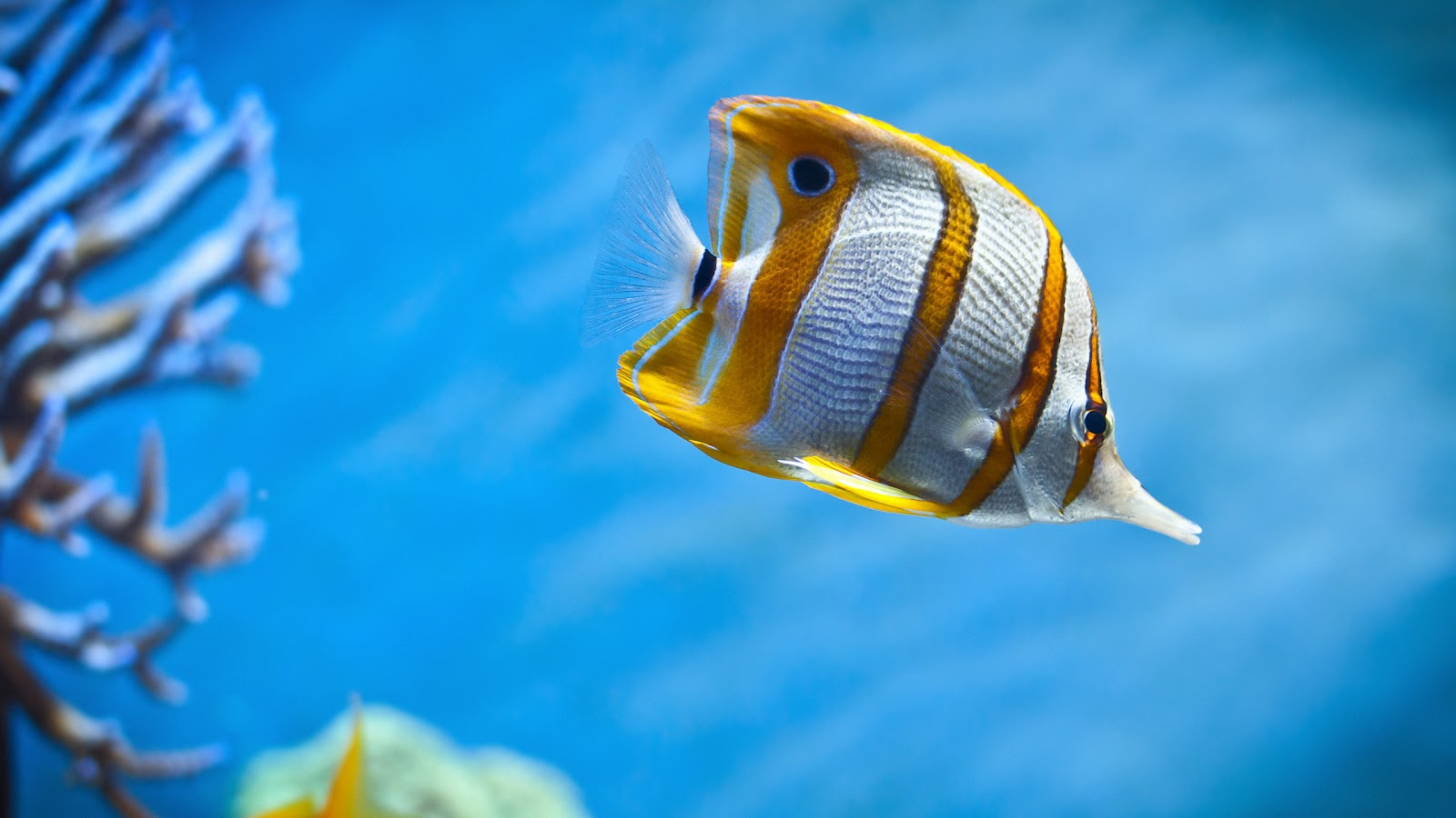 http://4.bp.blogspot.com/-S-XLcFvMIdU/UFQfnk4b9zI/AAAAAAAABt0/oaVKDJvj_b8/s1600/Fish-27-Inch-iMac-Backgrounds-Wallpaper.jpg