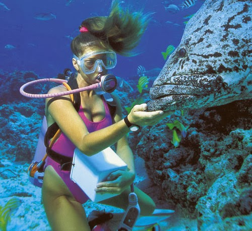 vacances en Australie, Sydney Opera House, Ayers Rock, plongée dans la Grande Barrière de Corail, Great Barrier Reef, Adventure in Australia, kangourou, bronzer sur Bondi Beach