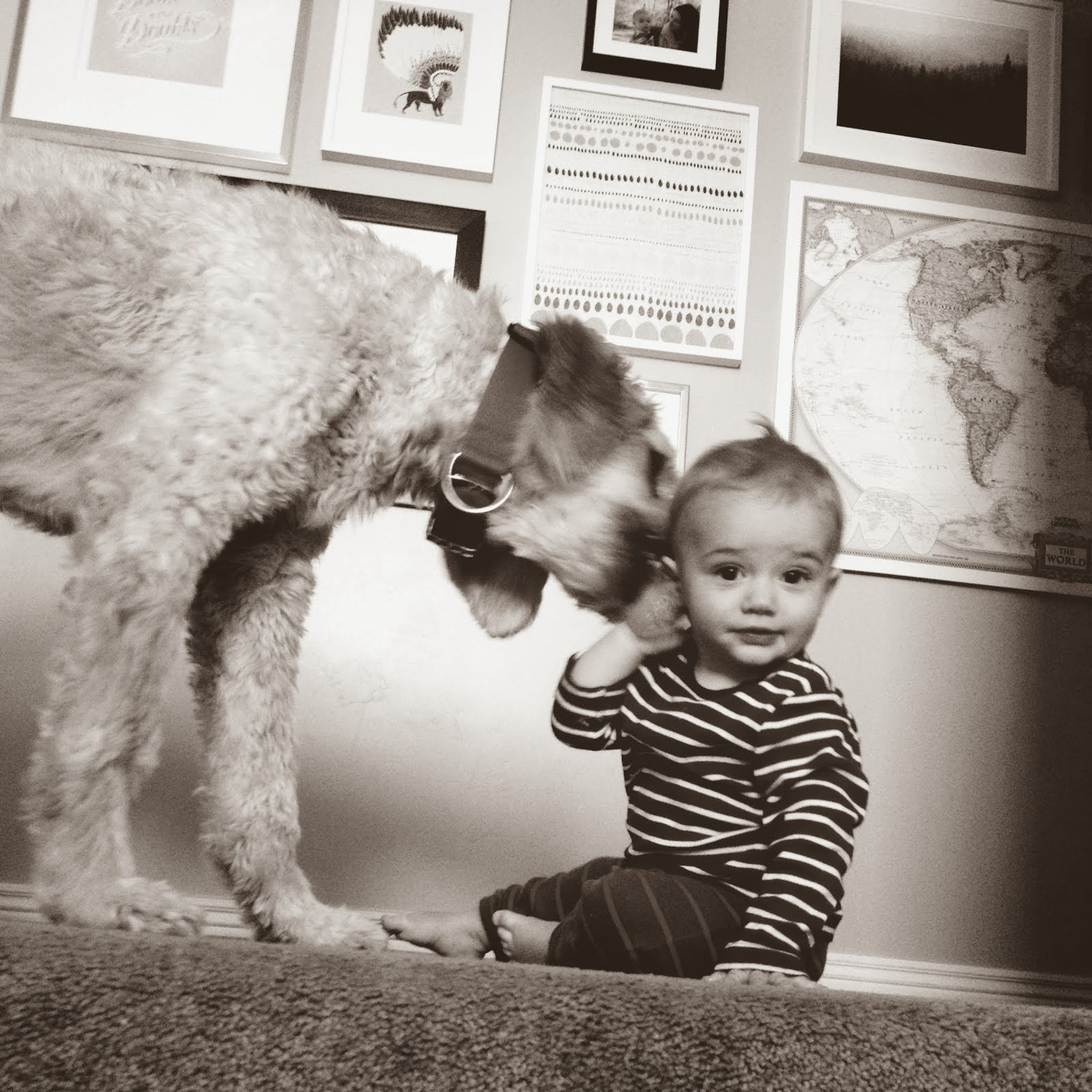 Calvin + Hobbes