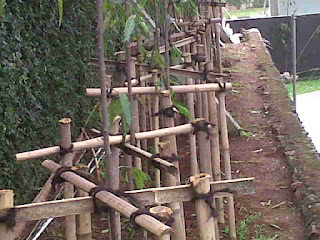 bambu penyangga tanaman glodogan tiang