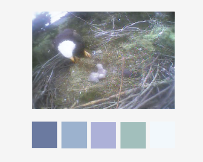 Color palette from the eagle nest image