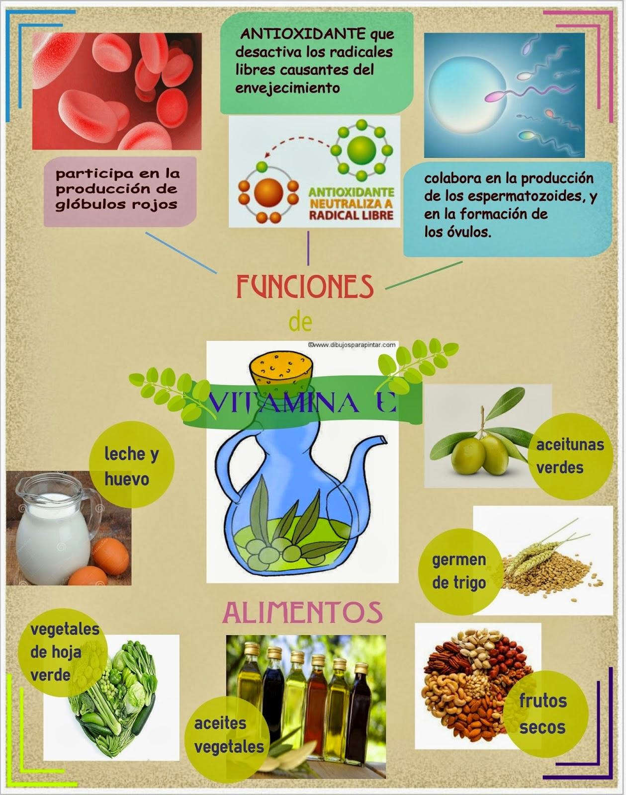 Infografía Vitamina E