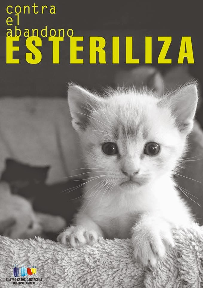 Esteriliza a tu gat@