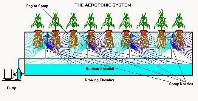 Tanaman Terbaik untuk Aeroponik Sistem