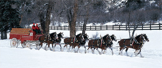 148 best images about <b>Budweiser Clydesdale</b> Kings on Pinterest ...