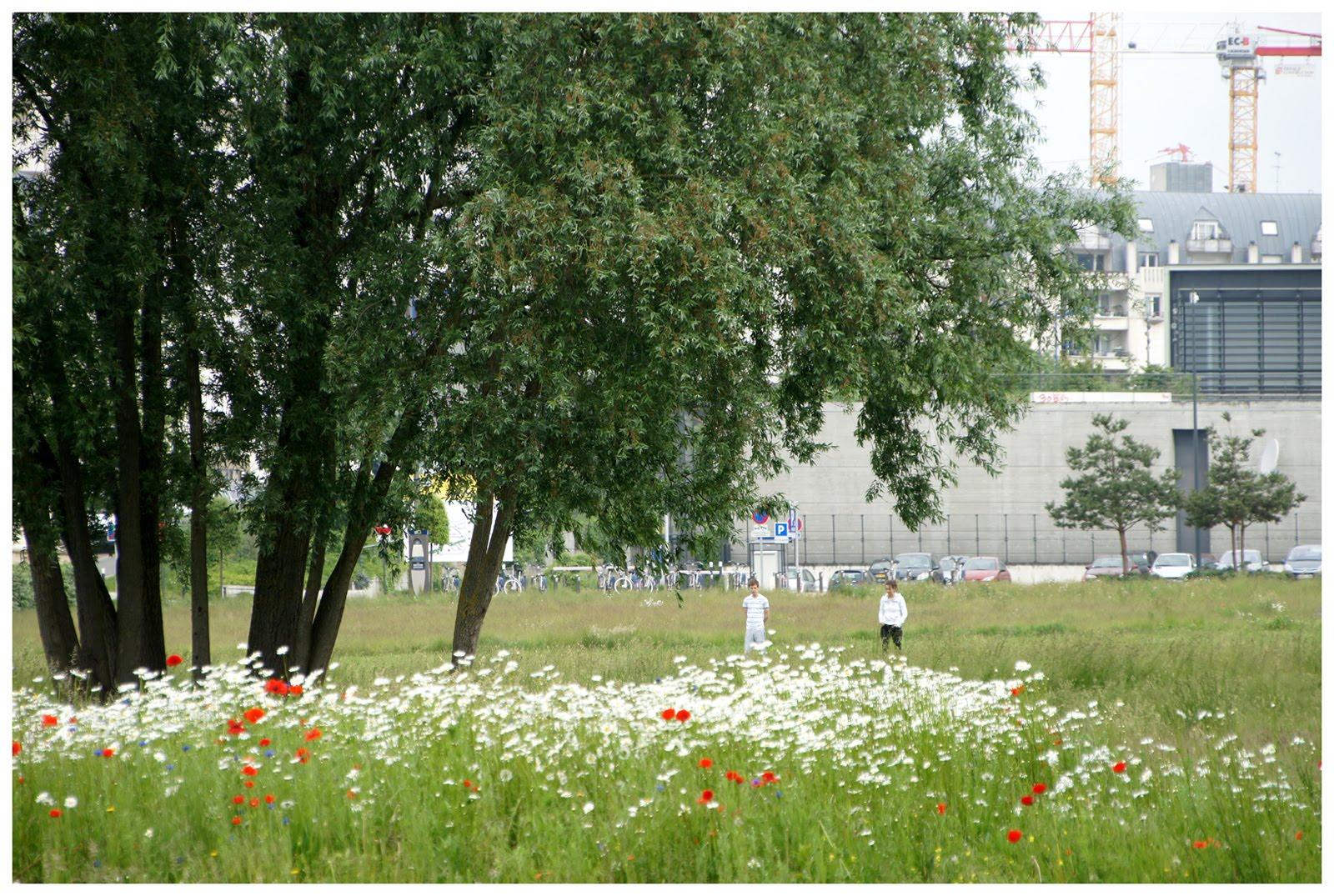 cergipontin cergy le haut 95 les saules willows. Black Bedroom Furniture Sets. Home Design Ideas