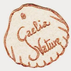 DESDE GALICIA !!!!