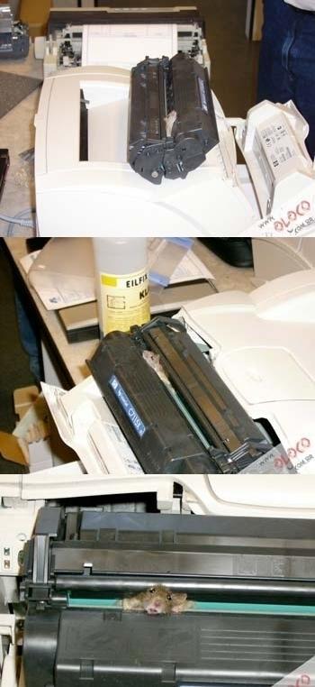 Rato na impressora que não funciona