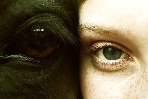Comme sappelle le masque avec les yeux