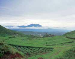 Argo wisata  gunung mas