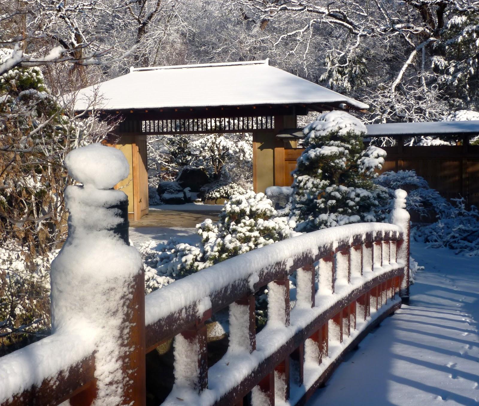 Garden Of Reflection Winter In Anderson Japanese Gardens
