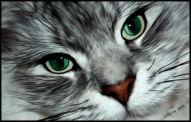 Cute Cat Wallpapers, Cute Kitten Wallpaper,