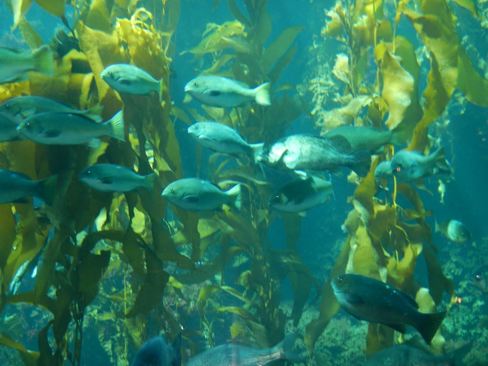 The Offshore Aquaholic Monterey Bay Aquarium The