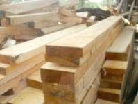kayu mahoni