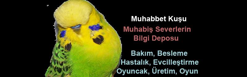 Muhabbet Kuşu, Muhabbet Kuşları, Üretim , Besleme