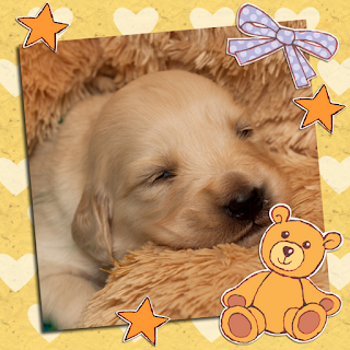 Picture of a sleepy little puppy from My Little Puppy, an illustrated children's ebook