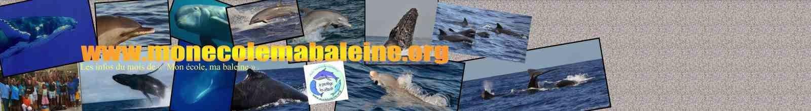 """Les infos du mois de l'association""""Mon école, ma baleine"""""""