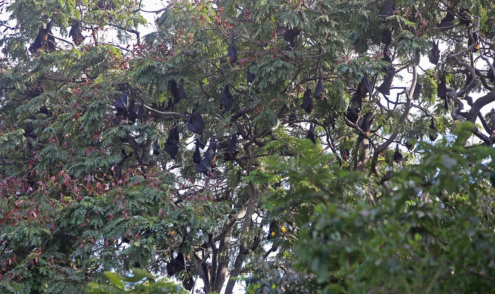 Mother earth bats in mumbai for Garden law trees
