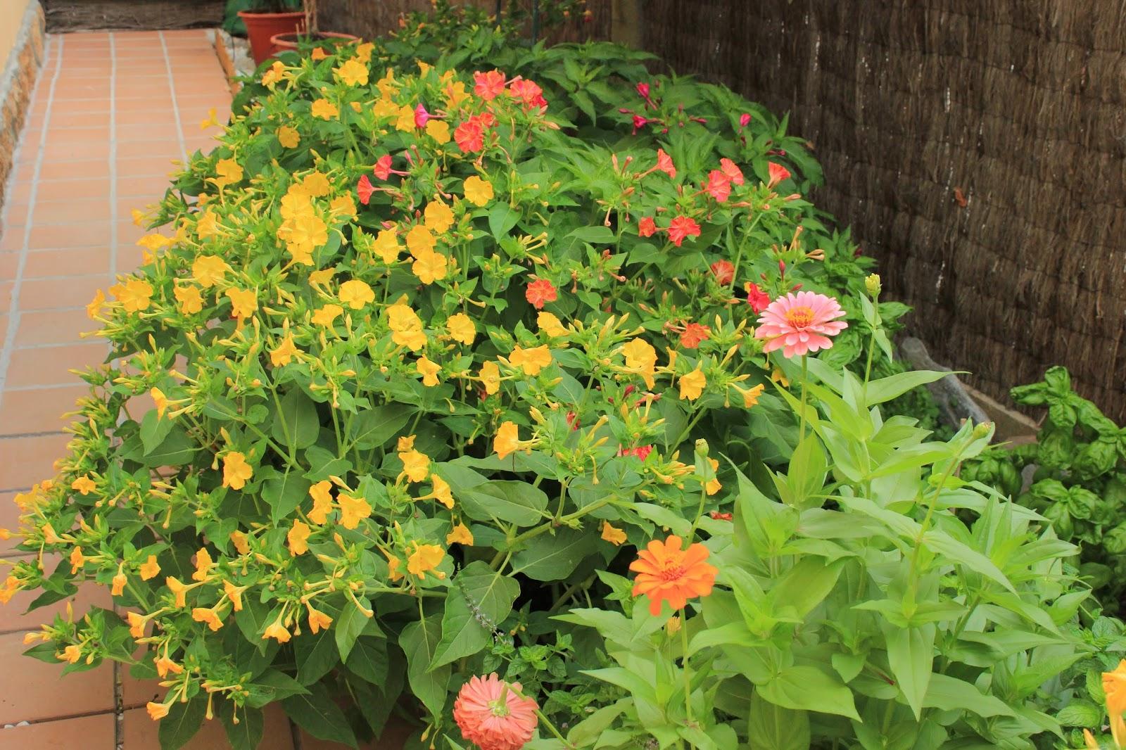 arte y jardiner a flores y plantas de arte y jardiner a On jardineria y plantas