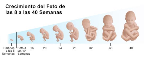 Tu bebé mes a mes