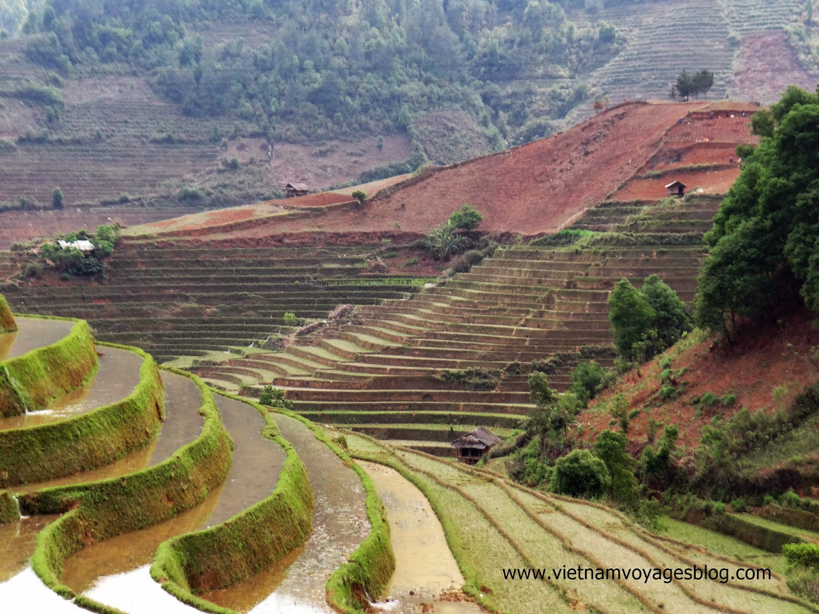 Les rizières à Tu Le, Yen Bai