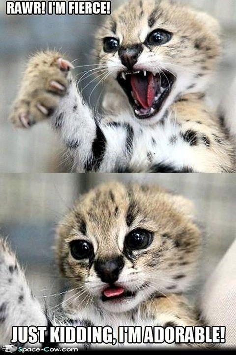 Adorable Baby CheetahsReally Cute Baby Cheetahs