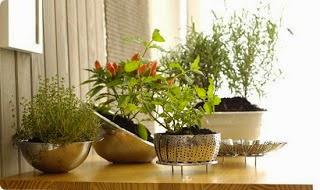 Lindo arranjo de plantas!
