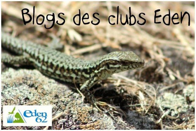 Blog des clubs Eden