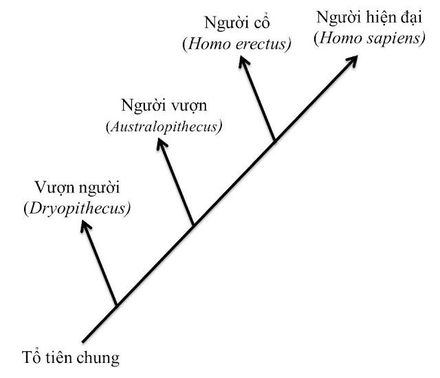 Sơ đồ phát sinh loài người kiểu phân nhánh
