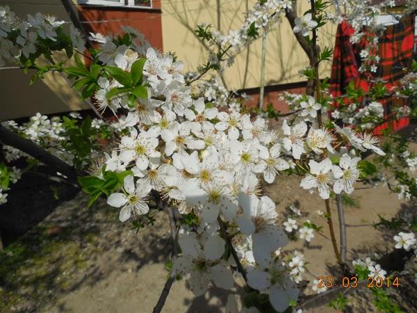 flori mirositoare