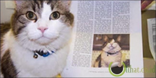 Oscar, si kucing peramal kematian