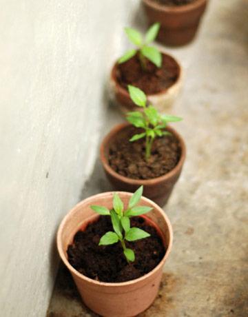 النصائح للزراعة المنزلية محدود patio-plants-1-lg.jpg