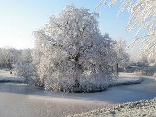 Stablo u snijegu, zima download besplatne pozadine slike za mobitele