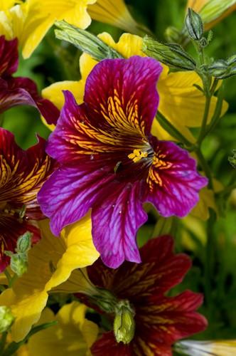 5 flores bellas las fotos de pepe - Fotos flores preciosas ...