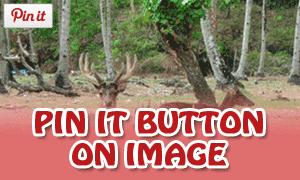 Memasang Asynchronous Pin It Button Di Blog
